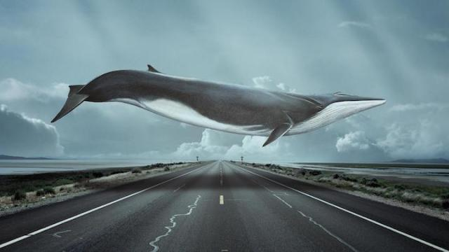 Highway with whale